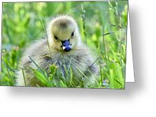 Cute Goose Chick Greeting Card