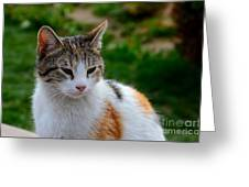 Cute Grey White And Orange Cat Poses And Gazes Greeting Card