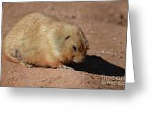 Cute Ground Squirrel Burrowing In The Dirt Greeting Card