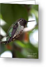 Cute Hummingbird Ready For Action Greeting Card