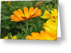 Cute In Orange Greeting Card