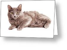 Cute Kitten Laying Over White Loking Forward Greeting Card