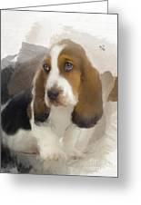 Cute Little Basset Artesien Normand Puppy Greeting Card