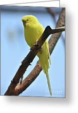 Cute Little Parakeet Resting On A Branch Greeting Card