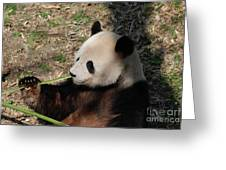 Cute Panda Bear Eating A Green Shoot Of Bamboo Greeting Card
