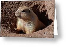 Cute Prairie Dog Climbing Out Of A Hole Greeting Card
