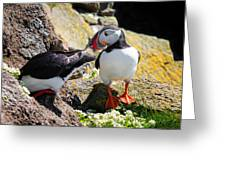 Cute Puffin Couple In Iceland Latrabjarg Greeting Card