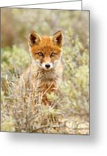 Cute Red Fox Kit Greeting Card