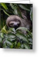 Cute Sloth Face Greeting Card