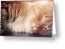 Cute Small Cat Sleeping Greeting Card