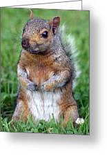 Cute Squirrel In The Park  Greeting Card