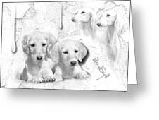 Cute White Salukis With Puppies Greeting Card
