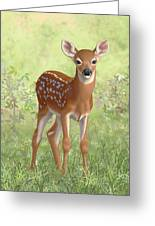 Cute Whitetail Deer Fawn Greeting Card by Crista Forest