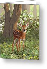 Cute Whitetail Fawn Greeting Card by Crista Forest