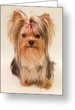 Cute Yorkie Greeting Card