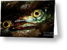 Cutlassfish Eyes Greeting Card