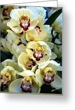 Cybidium Orchids Greeting Card