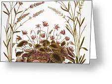 Cyclamen & Lavender, 1613 Greeting Card