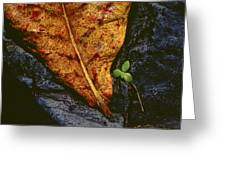 Cycle Of Life Greeting Card