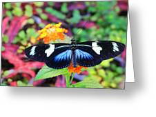 Cydno Longwing Butterfly Greeting Card