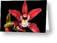 Cymbidium Orchid 001 Greeting Card