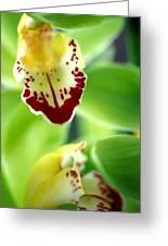 Cymbidium Seafoam Emerald Orchid Greeting Card by Kathy Yates