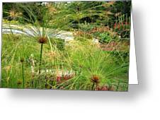 Cyperus Papyrus - Bulrush Greeting Card