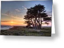 Cypress At Sunset Greeting Card