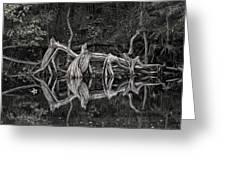 Cypress Design Greeting Card