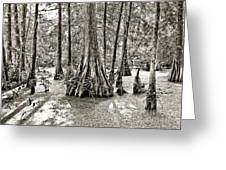 Cypress Evening Greeting Card