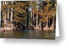 Cypress Grove Five Greeting Card