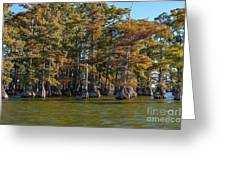 Cypress Grove Four Greeting Card