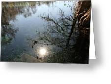 Cypress Knees And Sunshine Greeting Card