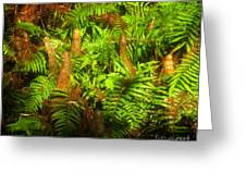Cypress Knees In Ferns Greeting Card