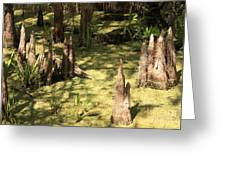 Cypress Knees In Green Swamp Greeting Card