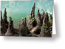 Cypress Knees In The Mist Greeting Card