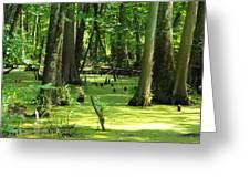 Cypress Knees In Wetlands Greeting Card