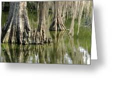 Cypress Knees Greeting Card