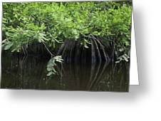 Cypress Leaves And Fluted Trunks Greeting Card