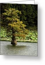 Cypress Matters Greeting Card