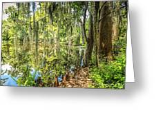 Cypress Pond Delight Greeting Card