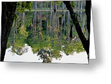 Cypress Pond Greeting Card