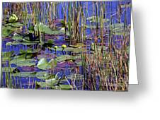 Cypress Pond Tranquility Greeting Card