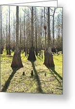 Cypress Sentinals Greeting Card