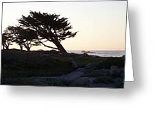 Cypress Silhouette Greeting Card