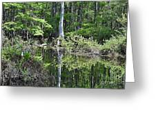 Cypress Slough Greeting Card