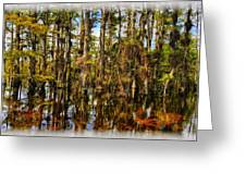 Cypress Strand Everglades Greeting Card