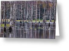 Cypress Swamp Greeting Card