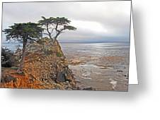 Cypress Tree At Pebble Beach Greeting Card