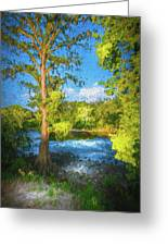 Cypress Tree By The River Greeting Card